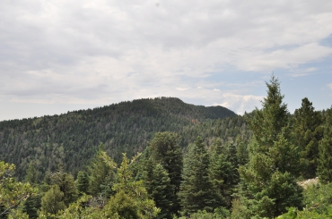 View Along the Trail to the Crest