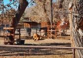 Corrales Horses